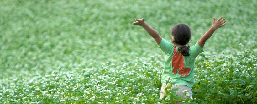 farm, organic, buckwheat, green, manure, girl, green manure, rural, agriculture, family farm