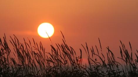 Joan Sullivan, photographer, female, sunset, orange, climate